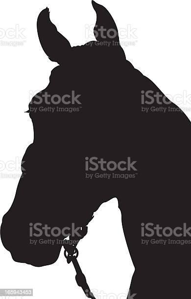 Horse head silhouette vector id165943453?b=1&k=6&m=165943453&s=612x612&h=wspv18446gqnwjxpscttqubt9bv9to zlz 7mdfrb88=