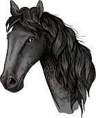 Horse head sketch of black arabian stallion