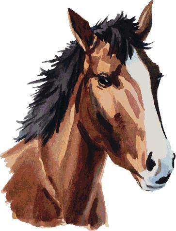 horse head watercolor