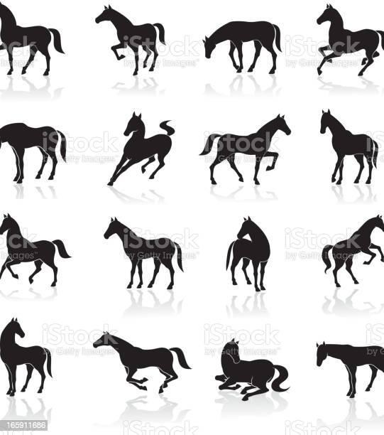 Horse icon set vector id165911686?b=1&k=6&m=165911686&s=612x612&h=94eufszyq6ng9u3jv6krcadhsgcsqwa7a6zi3zrrwis=