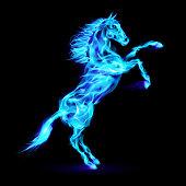 Blue fire horse rearing up. Illustration on black background.