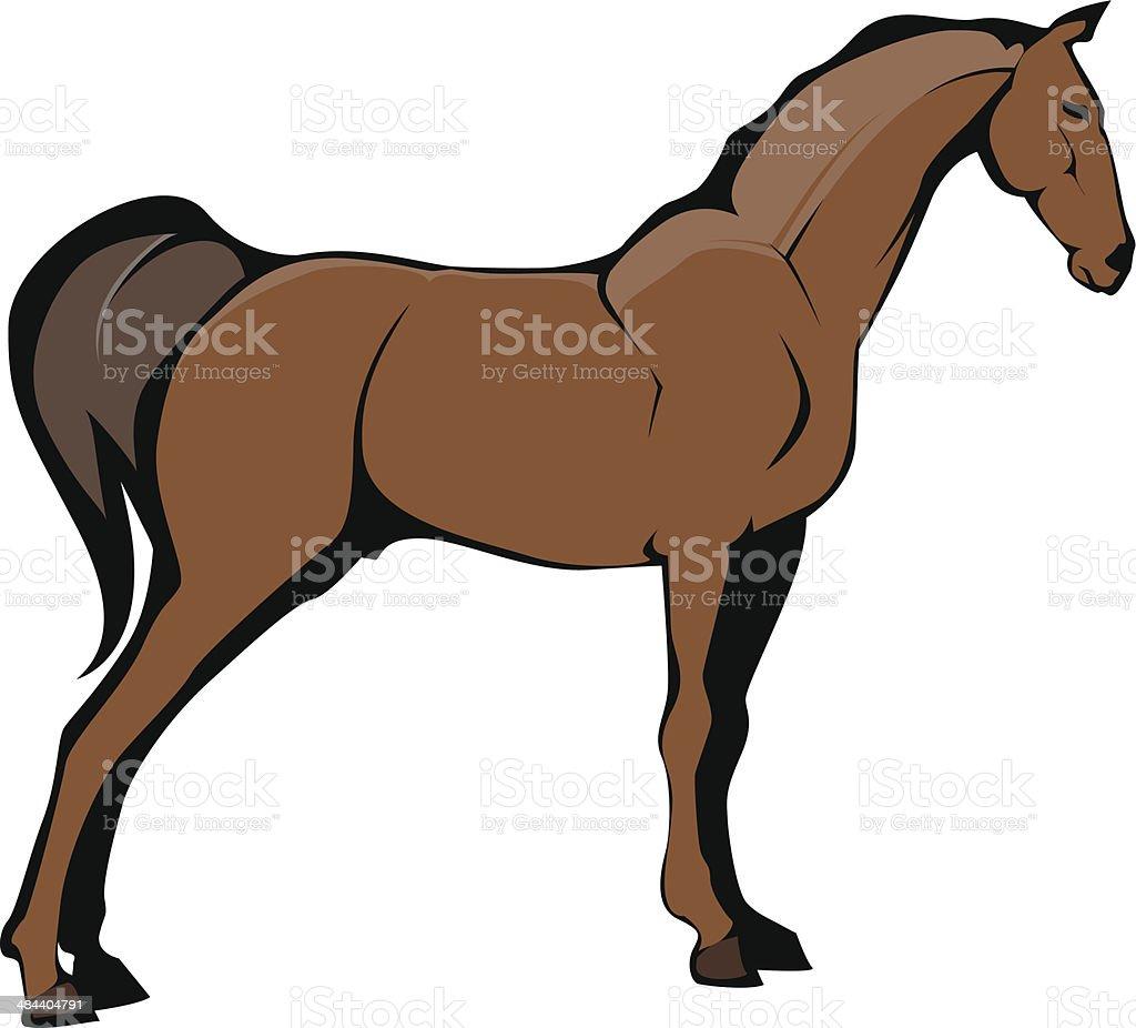 Horse Illustration vector art illustration