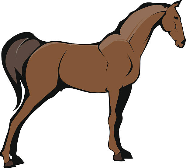 Horse Illustration vector art illustration