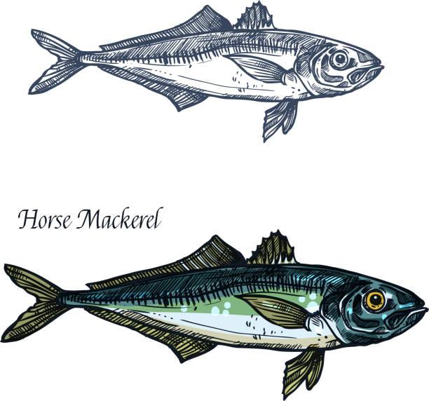 Horse mackerel fish vector isolated sketch icon vector art illustration