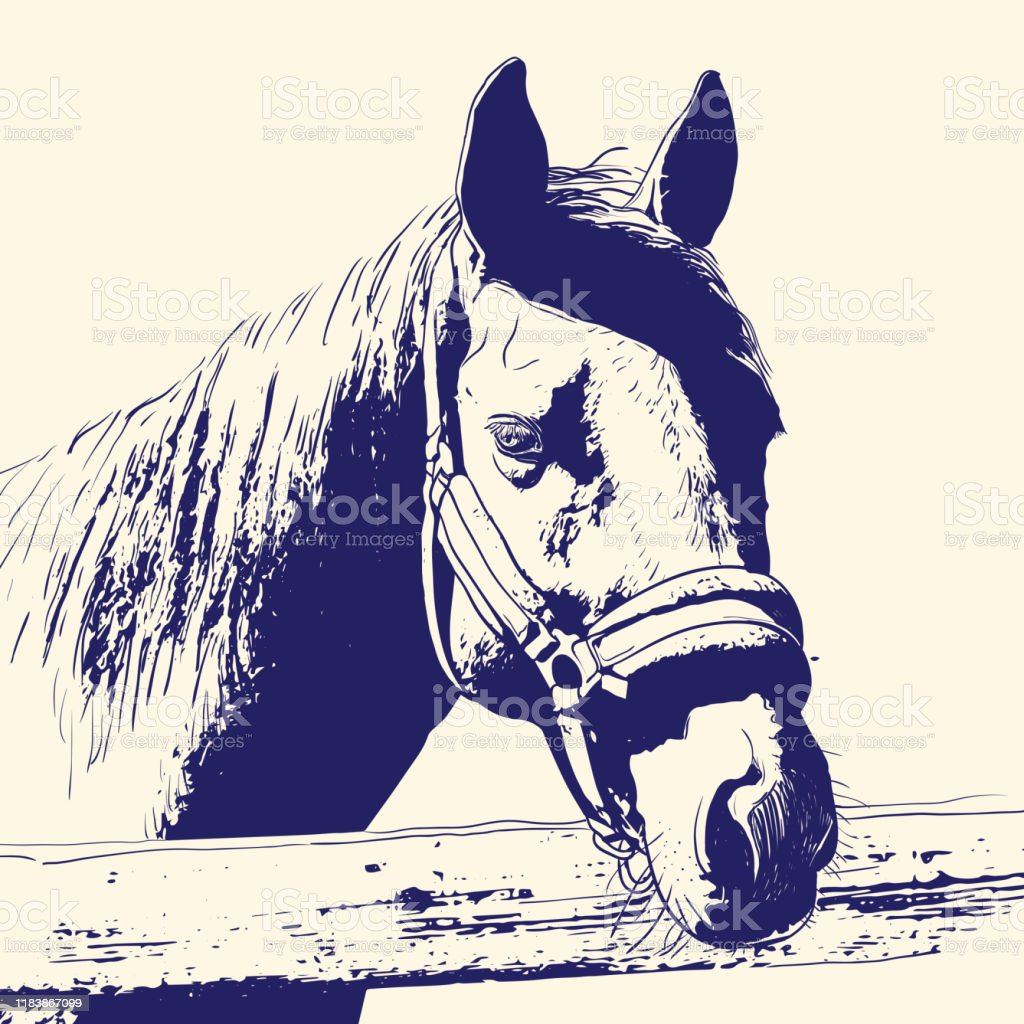 Horse Portrait Bridle On Head Snaffle Headband Blue Color On Beige Background Sketch Outline Draft Drawing Image For Design And Tattoo Vector Stock Illustration Download Image Now Istock