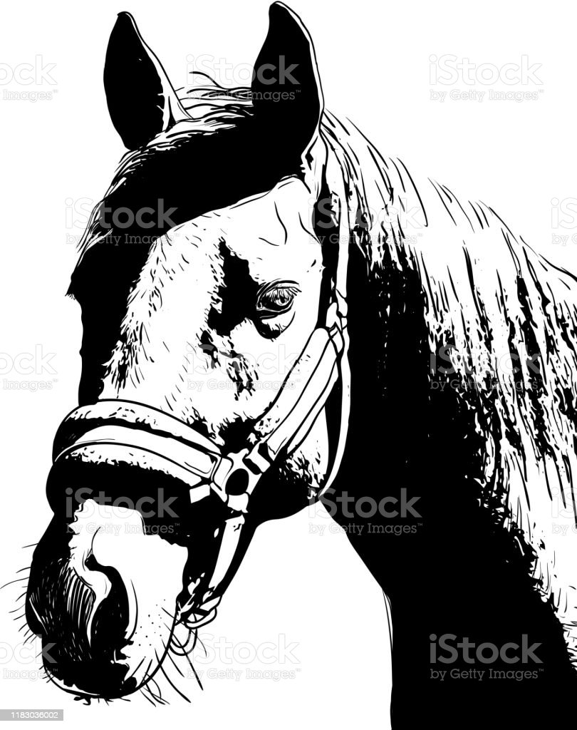 Horse Portrait Bridle On Head Snaffle Headband Isolated Black Color On White Background Sketch Outline Draft Drawing Image For Design And Tattoo Vector Stock Illustration Download Image Now Istock