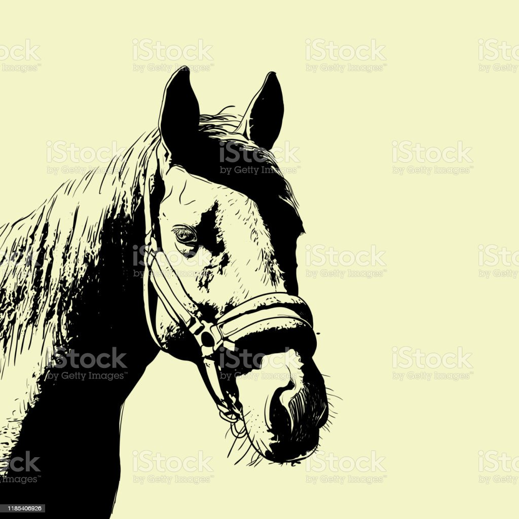 Horse Portrait Bridle On Head Snaffle Headband Isolated Brown Color On Beige Background Sketch Outline Draft Drawing Image For Design And Tattoo Vector Stock Illustration Download Image Now Istock
