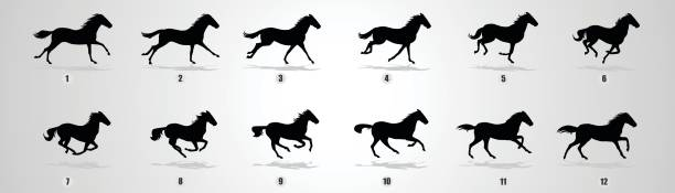 Horse run cycle silhouette vector art illustration