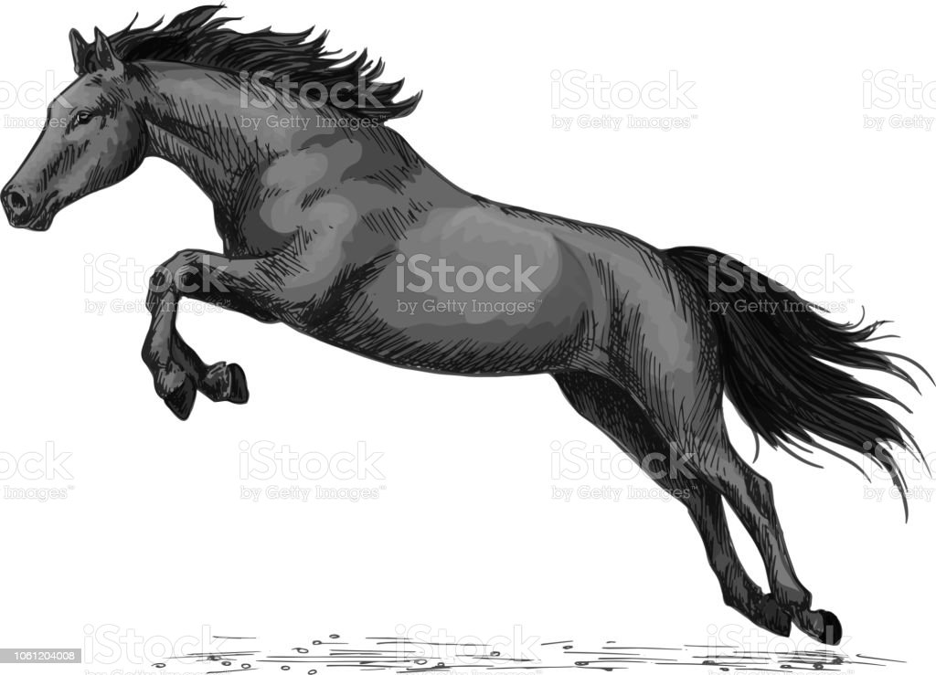 Horse Running And Jumping Vector Sketch Symbol Stock Illustration Download Image Now Istock