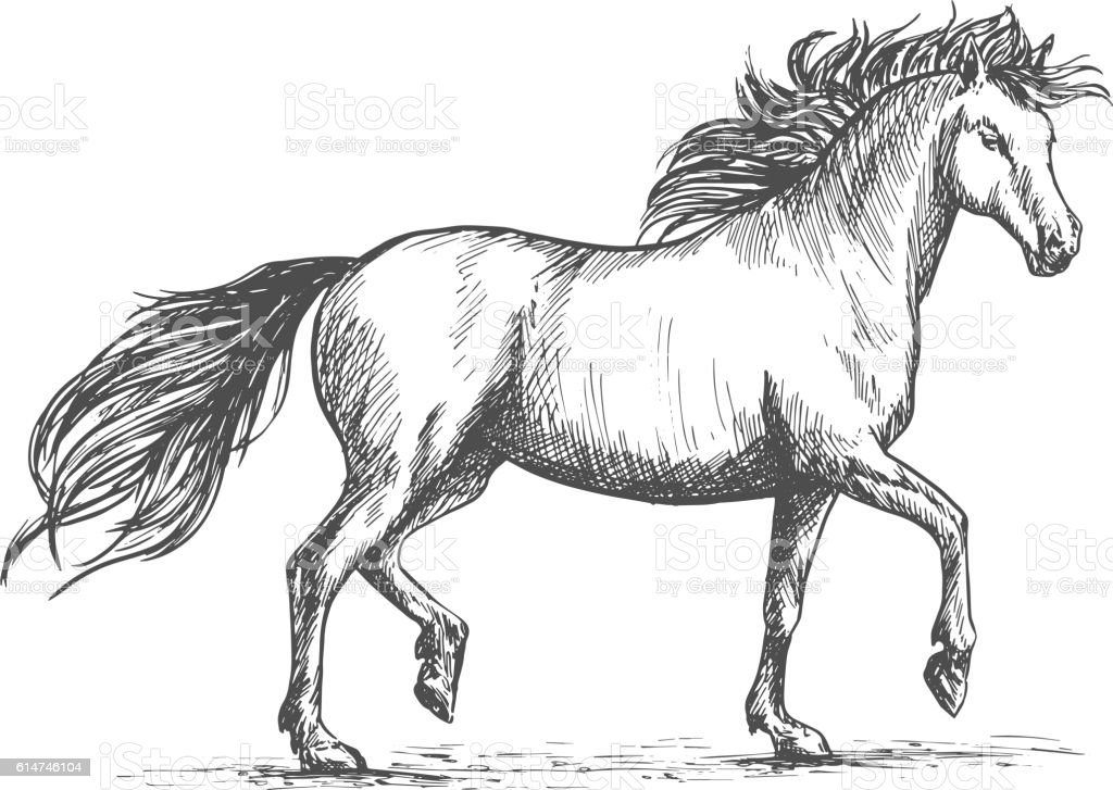 Horse Sketch With Galloping Arabian Racehorse Stock Illustration Download Image Now Istock