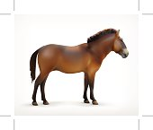 Horse, vector icon,  isolated on white background