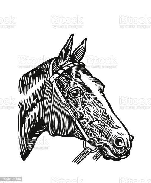 Horse vector id1003198430?b=1&k=6&m=1003198430&s=612x612&h=r3pg4u4tlopzajc0tq9fgffwsfn7muyfegys2t7vdpy=