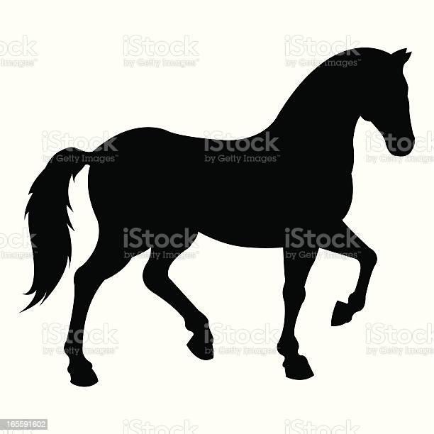 Horse vector id165591602?b=1&k=6&m=165591602&s=612x612&h=youwudigjc6hwnmuq38kra geq1tw i8gzulwsqf4aa=
