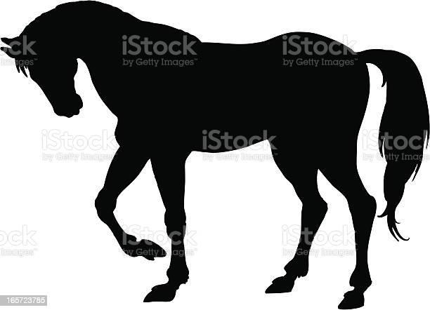 Horse vector id165723785?b=1&k=6&m=165723785&s=612x612&h=qwc0qv y26wz1hjvep9fq bc3lnffu1zwyxravvmp 0=