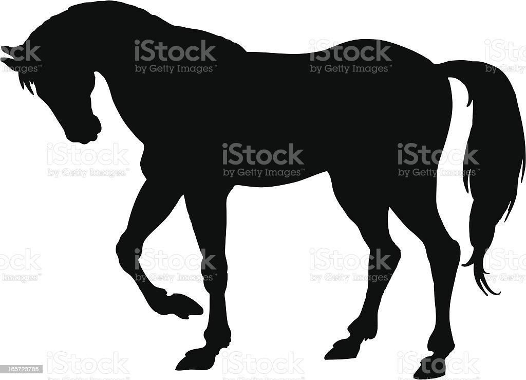 royalty free horse clip art vector images illustrations istock rh istockphoto com vector horse silhouette vector horse head