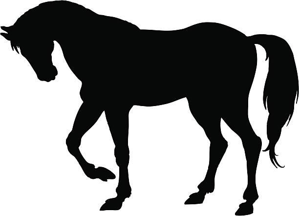 Cheval - Illustration vectorielle