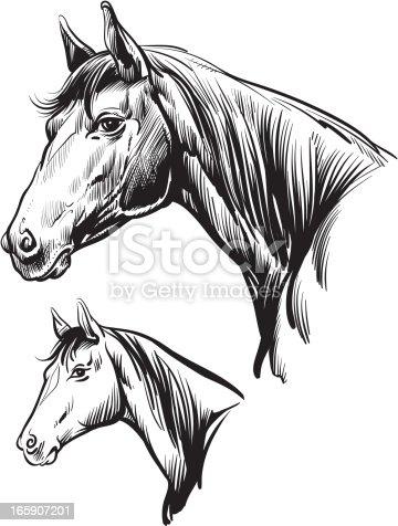 Illustration of horse head.