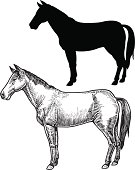 """Horse. Pen and ink illustration of a farm horse and it's silhouette. Check out my """"Vectors Animals & Insects"""" light box for more."""