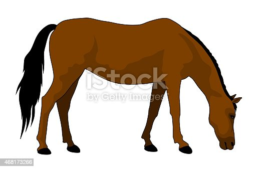 vector illustration of feeding brown horse