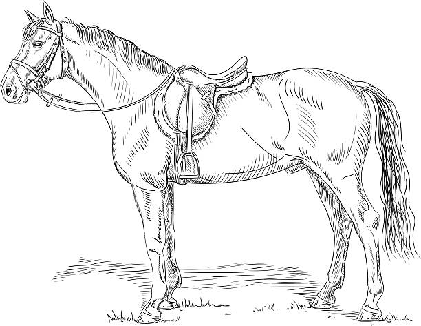 Animal Harness Illustrations, Royalty-Free Vector Graphics