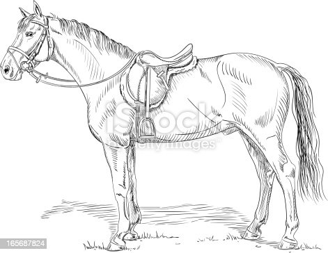 Horse With Saddle And Bridle Stock Vector Art & More