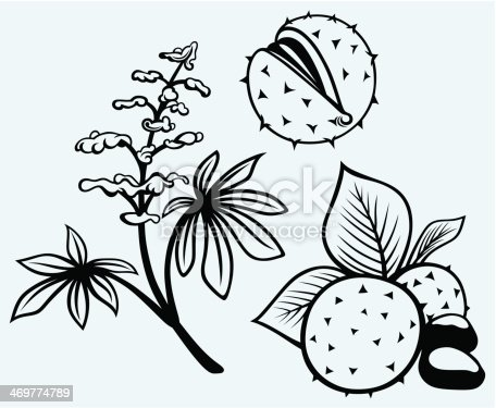 Horse Chestnut Leaf coloring page | Free Printable Coloring Pages