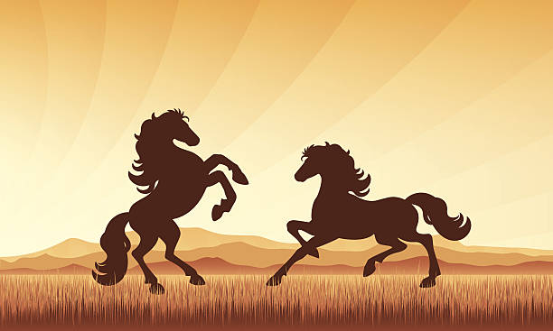 Chevaux en champ sur coucher de soleil vector illustration fond de la silhouette. - Illustration vectorielle