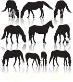 Silhouettes of different horses out in pasture.  Very detailed.