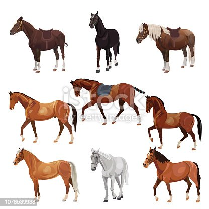 Horses in various poses. Collection of vector illustrations isolated on white background