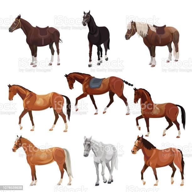 Horses in various poses vector id1078539938?b=1&k=6&m=1078539938&s=612x612&h=itjifu ohyqz8qhj2  za7ozwbibkshofaxvkfjgrim=