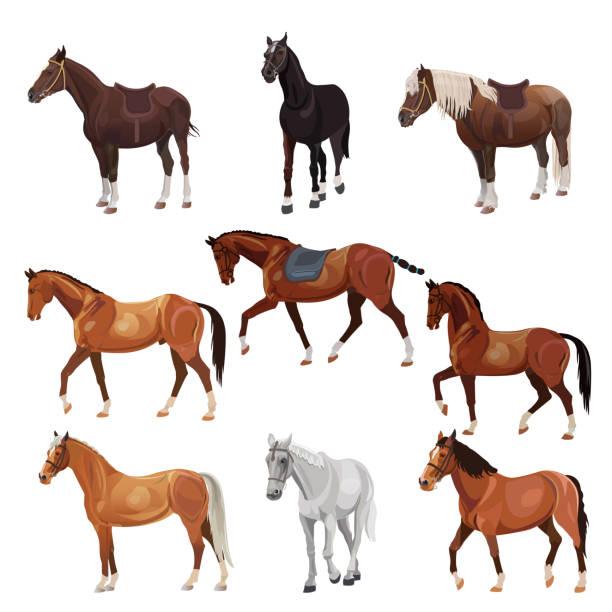 ilustraciones, imágenes clip art, dibujos animados e iconos de stock de caballos en varias poses - caballo