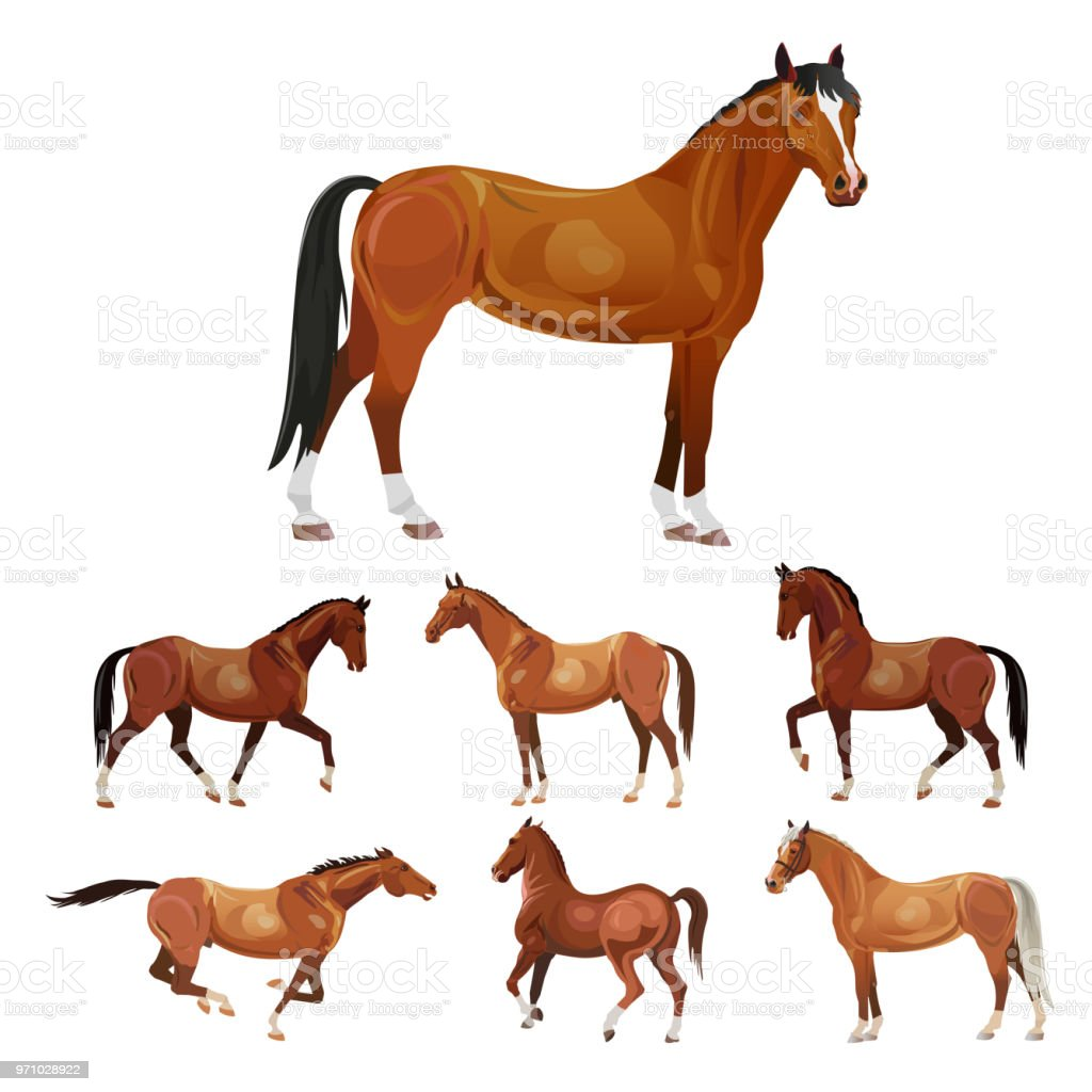 Horses in various poses vector art illustration