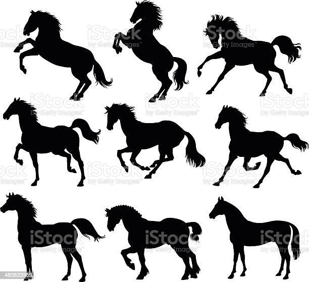 Horses silhouettes vector id483833959?b=1&k=6&m=483833959&s=612x612&h=4omdyknf 3ax4c meqs13x0kqphyge82lmvrdczdmmi=