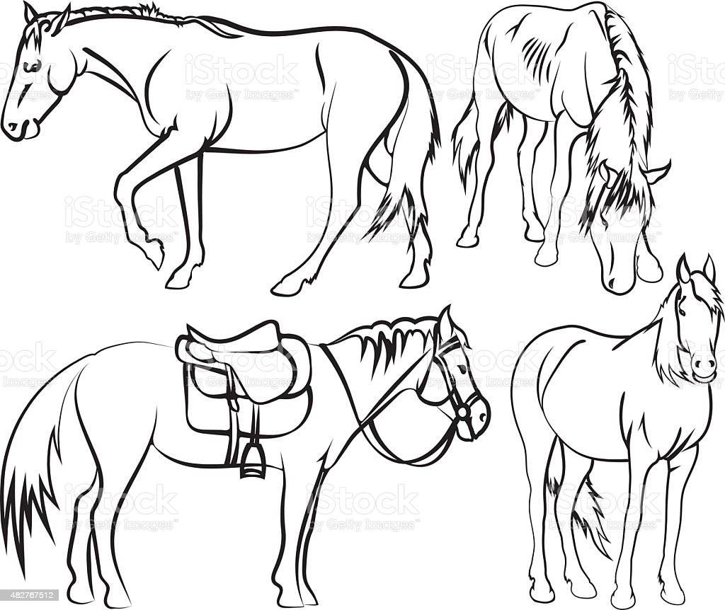 Horse's sketches vector art illustration
