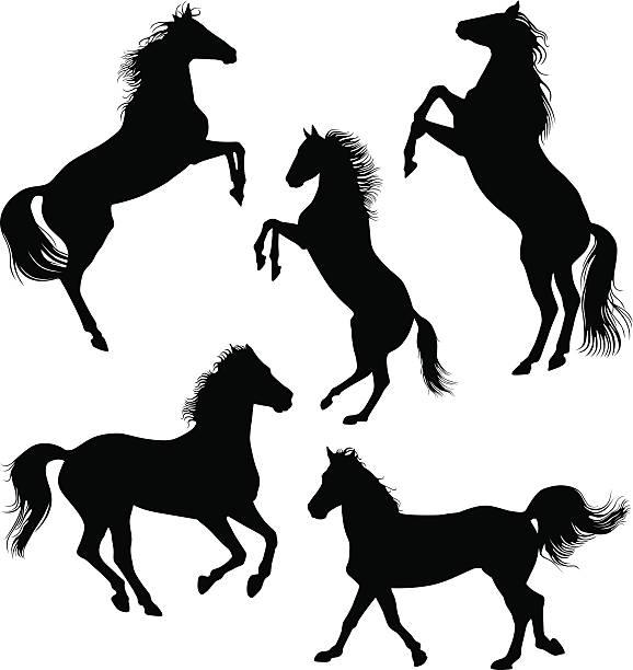 Horses vector art illustration