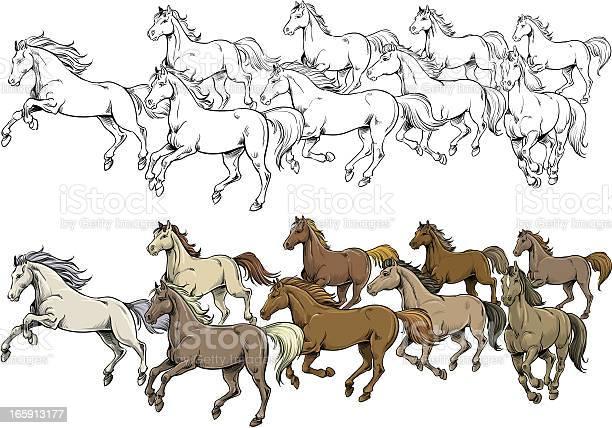 Horses vector id165913177?b=1&k=6&m=165913177&s=612x612&h=gsqk6vg94abcfcugc679yhbvqxpynurzrz3mxjpxdw0=