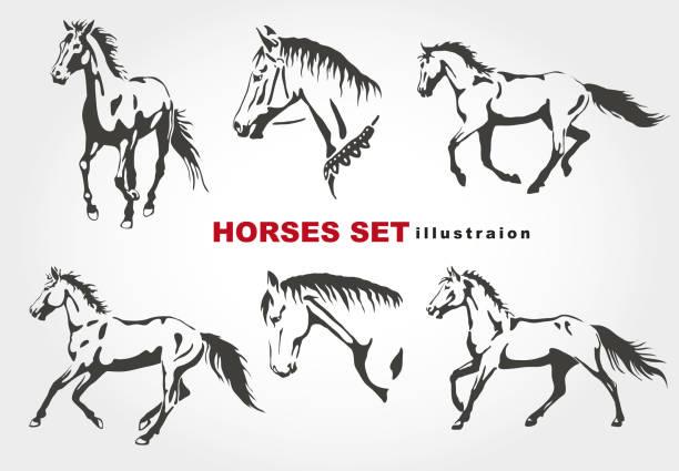 ilustraciones, imágenes clip art, dibujos animados e iconos de stock de los caballos. - caballo