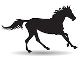 horse,silhouette on a white background