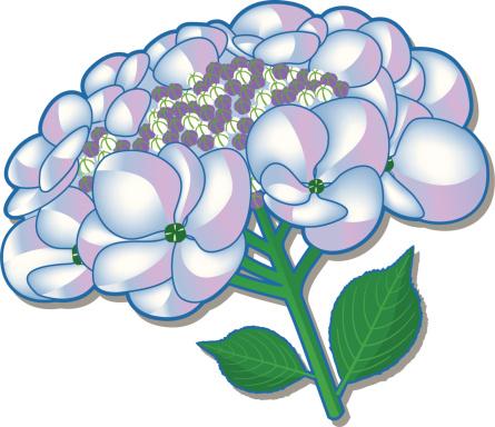 Hortensiaflower