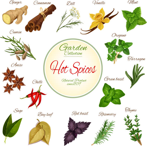 Hot spice, herb and condiment poster design vector art illustration