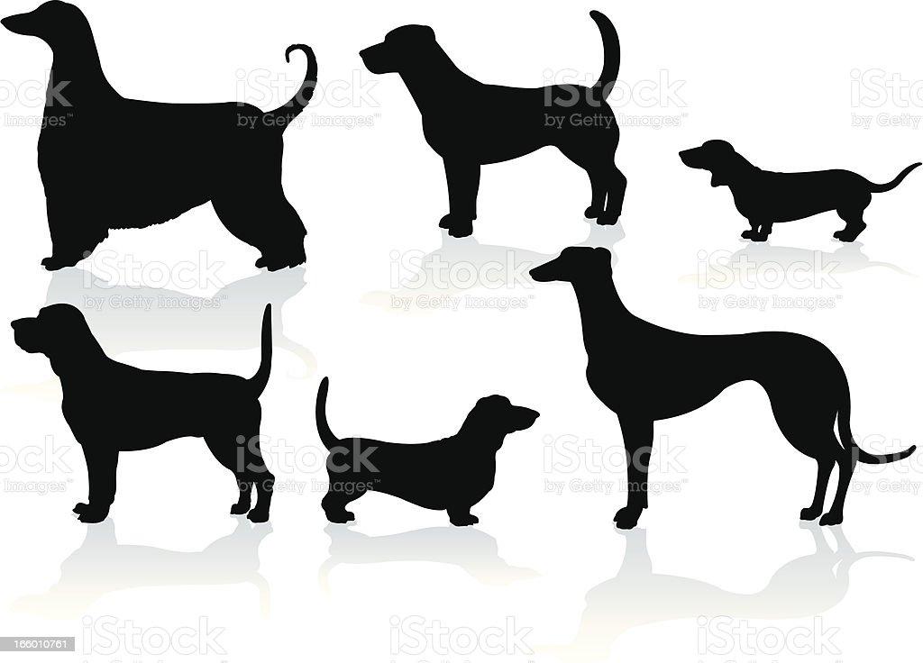 Hound Dogs- Dachshund, Blood, Greyhound, Basset, Afghan, Beagle vector art illustration
