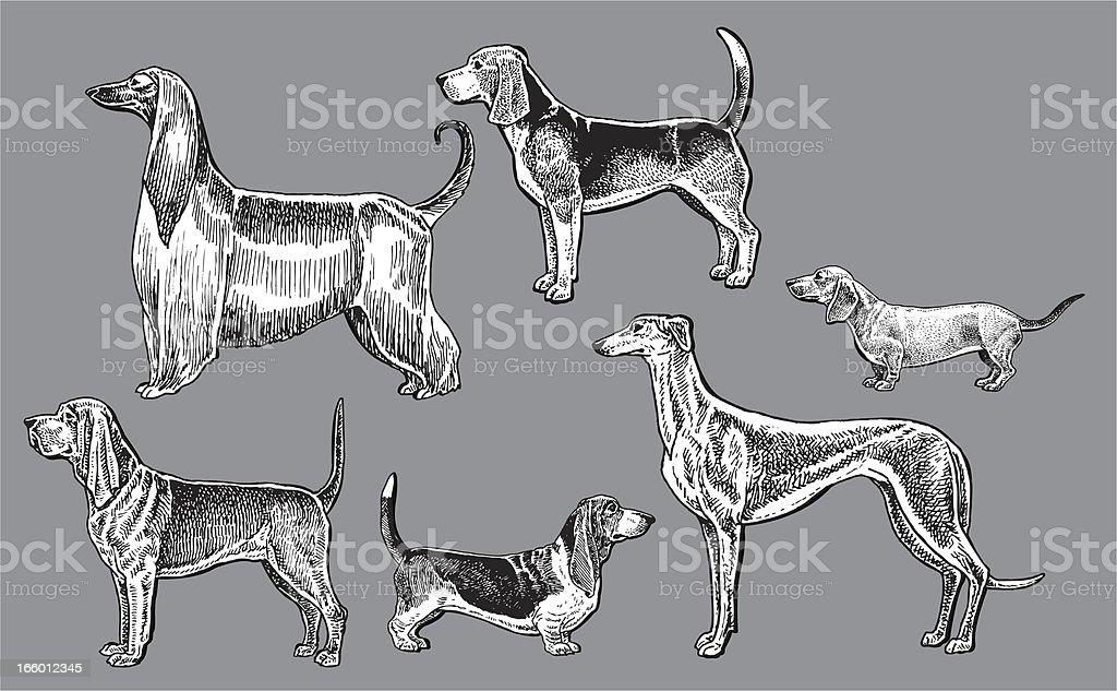 Hound Dogs- perro tejonero, sangre, Greyhound, Basset, afgano, Beagle - ilustración de arte vectorial