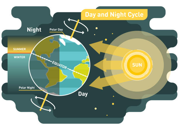 24 hours day and night cycle vector diagram 24 hours day and night cycle diagram, graphic vector illustration with sun and planet earth equator stock illustrations
