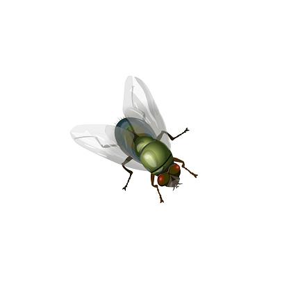 House fly vector