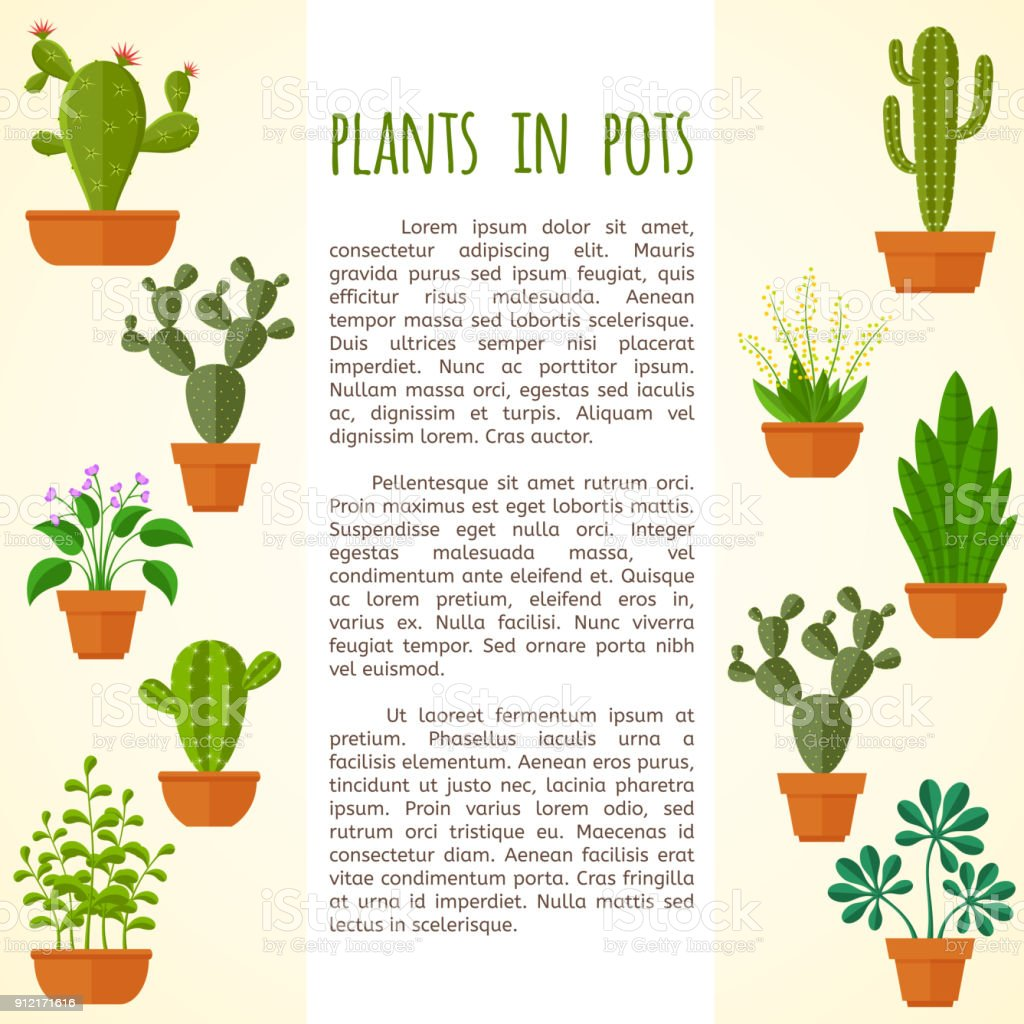 House Plant And Cactus Vector Brochure Page Template Stock Vector ...