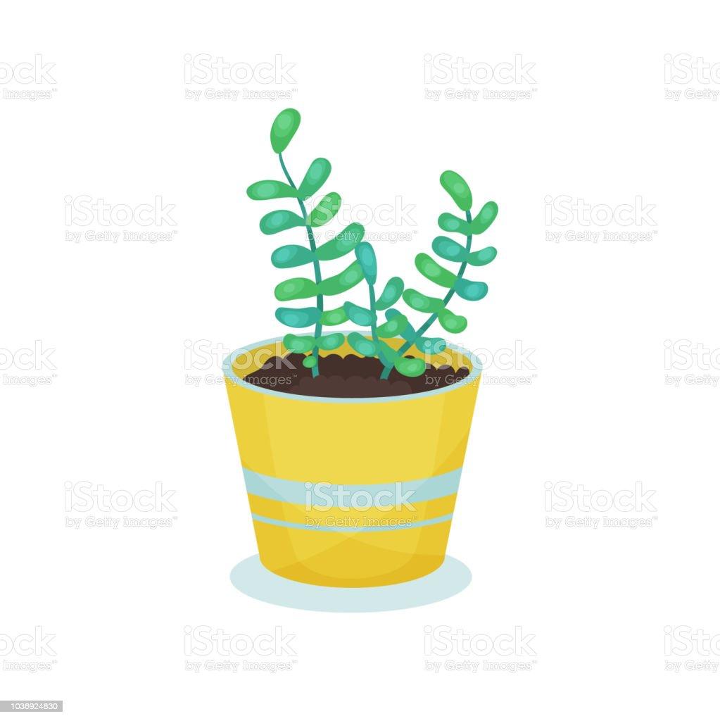 Plante Dinterieur En Pot De Fleur Element De Decoration Maison