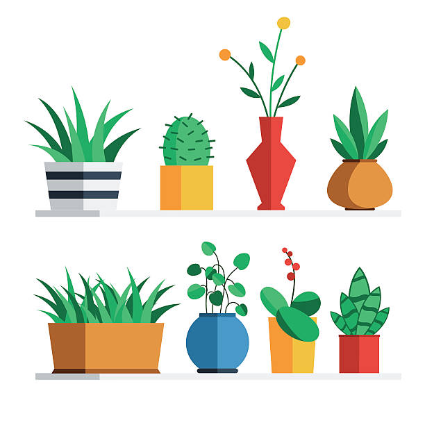 House plants and flowers House plants and flowers in colored pots on the shelf for home or office interior decoration. Vector illustration flat style design set isolated on white background potted plant stock illustrations