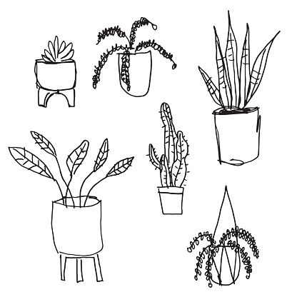 House Plants Black and White