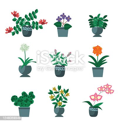 House plants vector simple collection