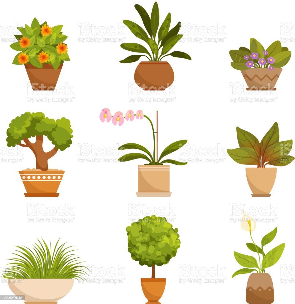 Zimmerpflanzen Dekorative Blumen Im Haus Vektorillustrationen Im Cartoonstil Stock Vektor Art Und Mehr Bilder Von Archivmaterial Istock